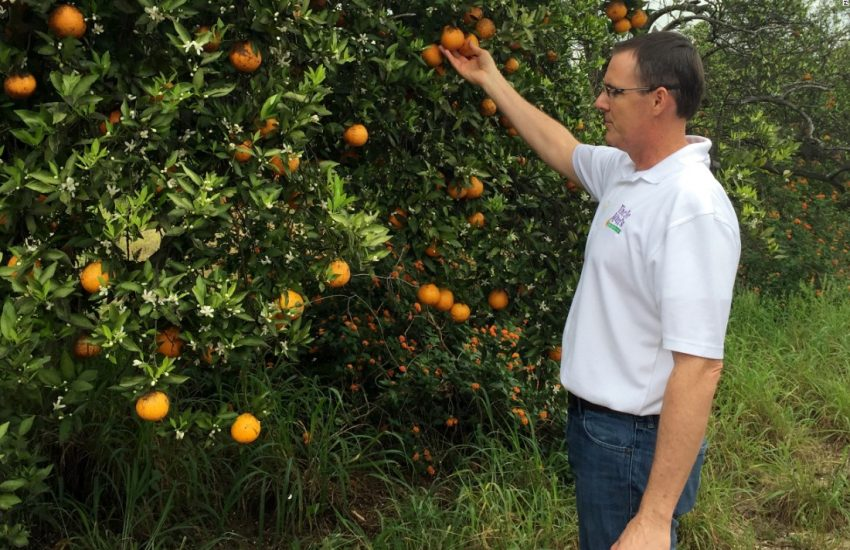 37-Resources To Help You Orange Trees